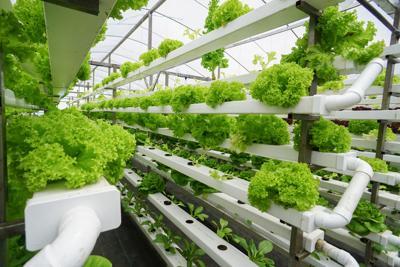 ialr agriculture.jpg