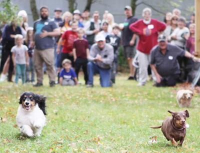 Oktoberfest wiener dog races