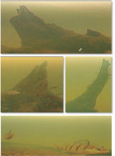 Underwater_images