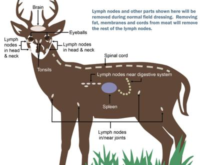 Deer diagram