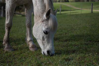 Chickasha Tractor Supply Company Store to Host Horse Health and Feed Event Nov. 9