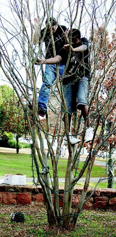 11-15 fol kids in tree.jpg