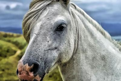 Vesicular Stomatitus Virus Confirmed in Oklahoma Equine