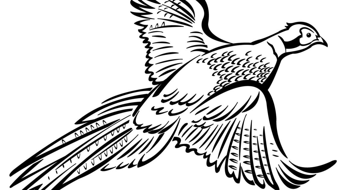 Pheasants Forever to host open house Tuesday at Hallie