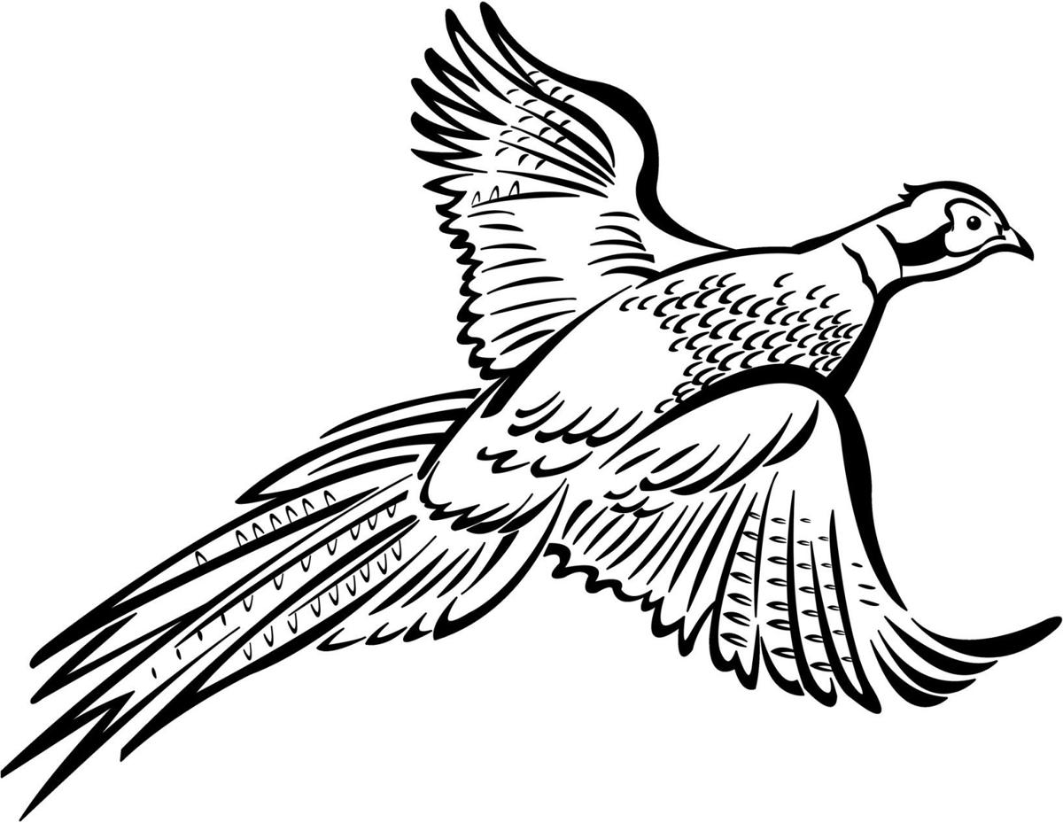 Line Art House Vector : Pheasants forever to host open house tuesday at hallie