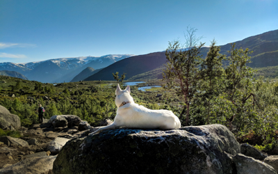 Taking Your Pup For A Hike? Here Are Some Must Haves Before You Head Out