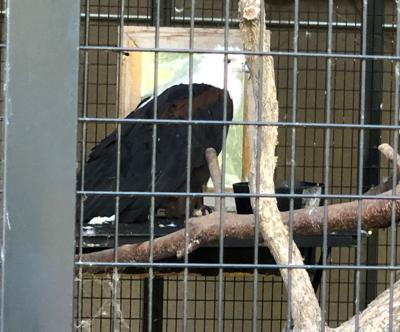 Irvine Park Petting Zoo