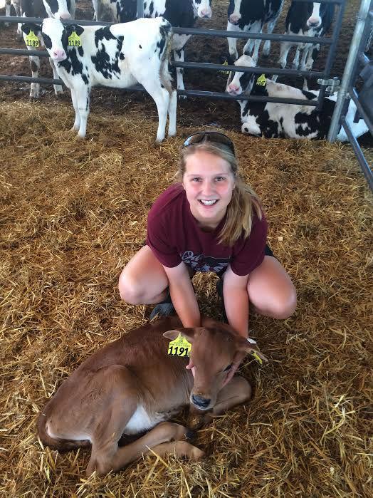 Kummer and calf