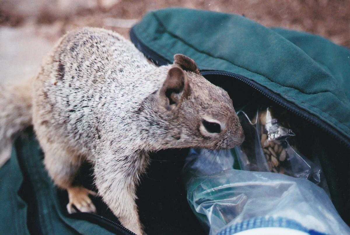 Camping with critters