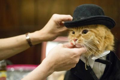 Fashion Cat Fashion Show