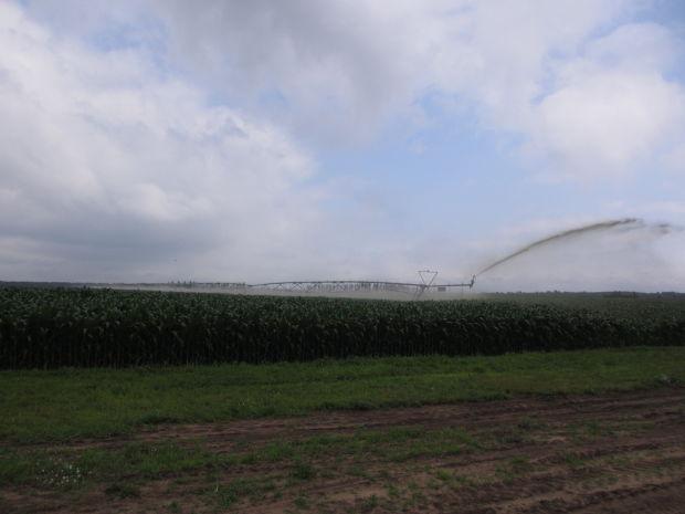 Manure irrigation 2