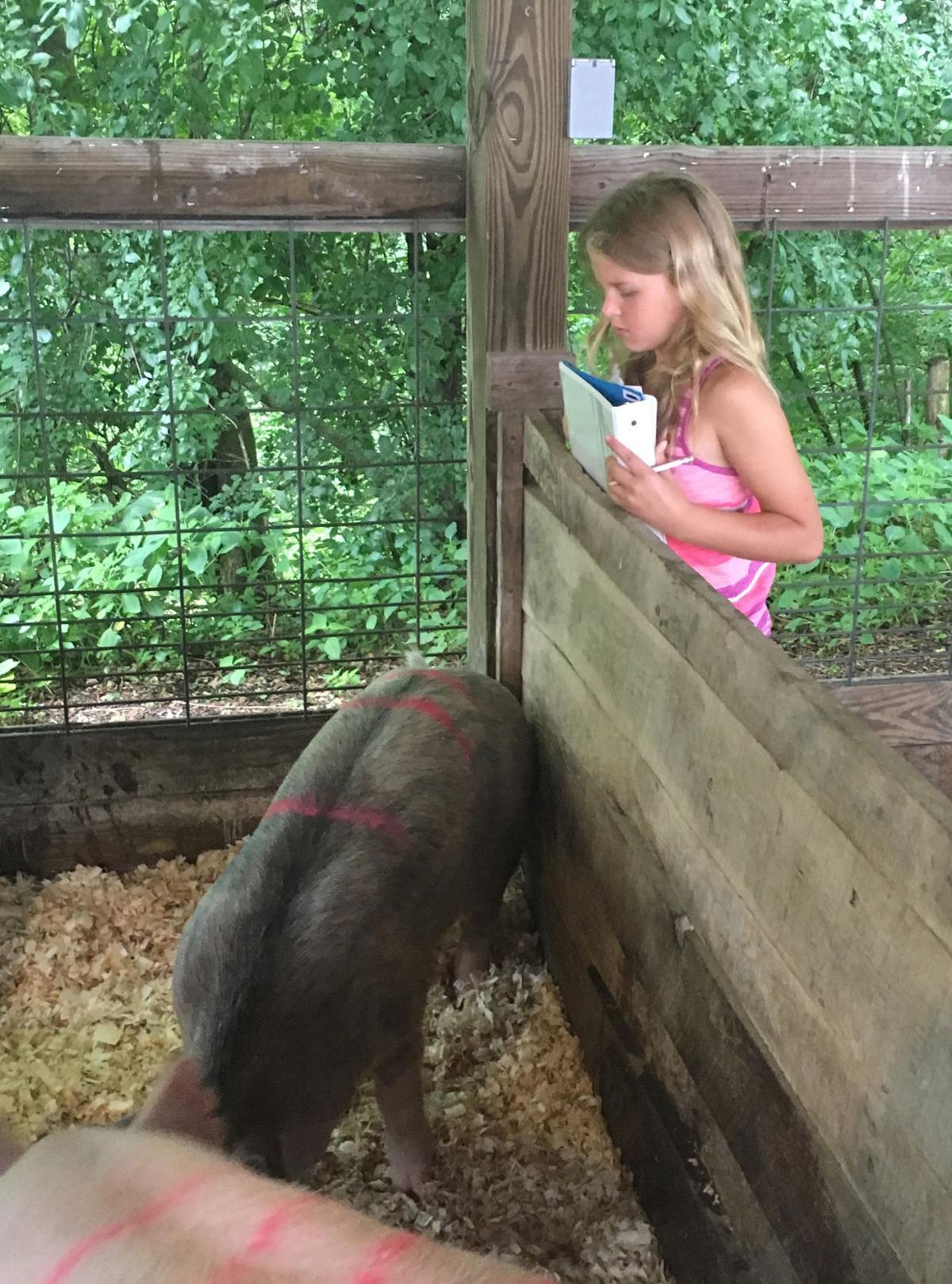 Pig judging