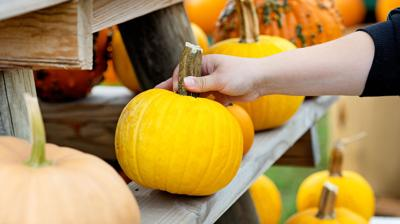 How to pick and prep the perfect pumpkin