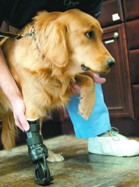 Dog prosthetic