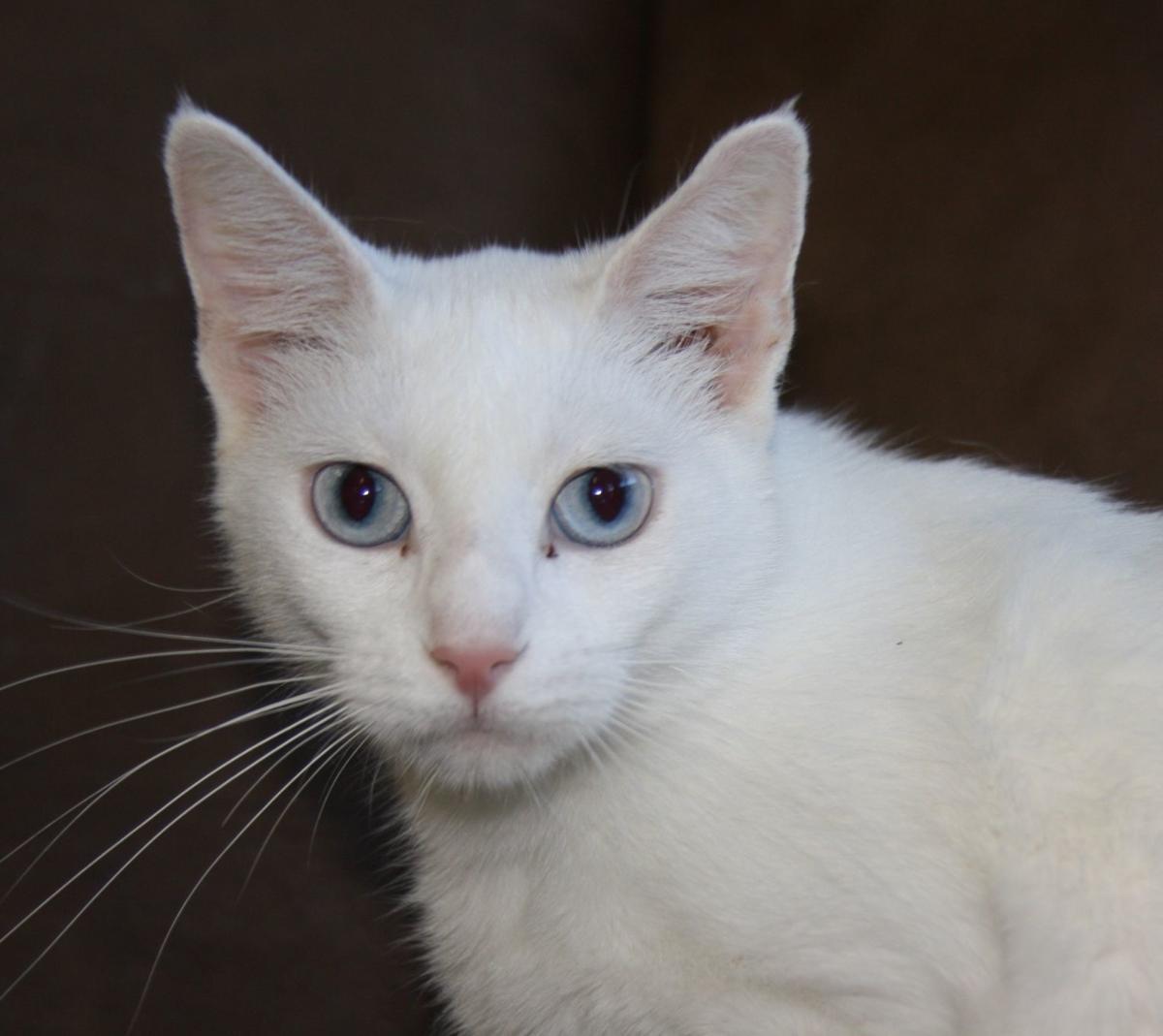 Pet Profile: Hadley