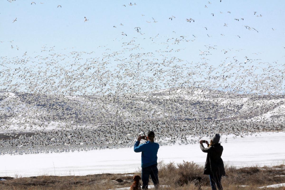 Freezout waterfowl migration