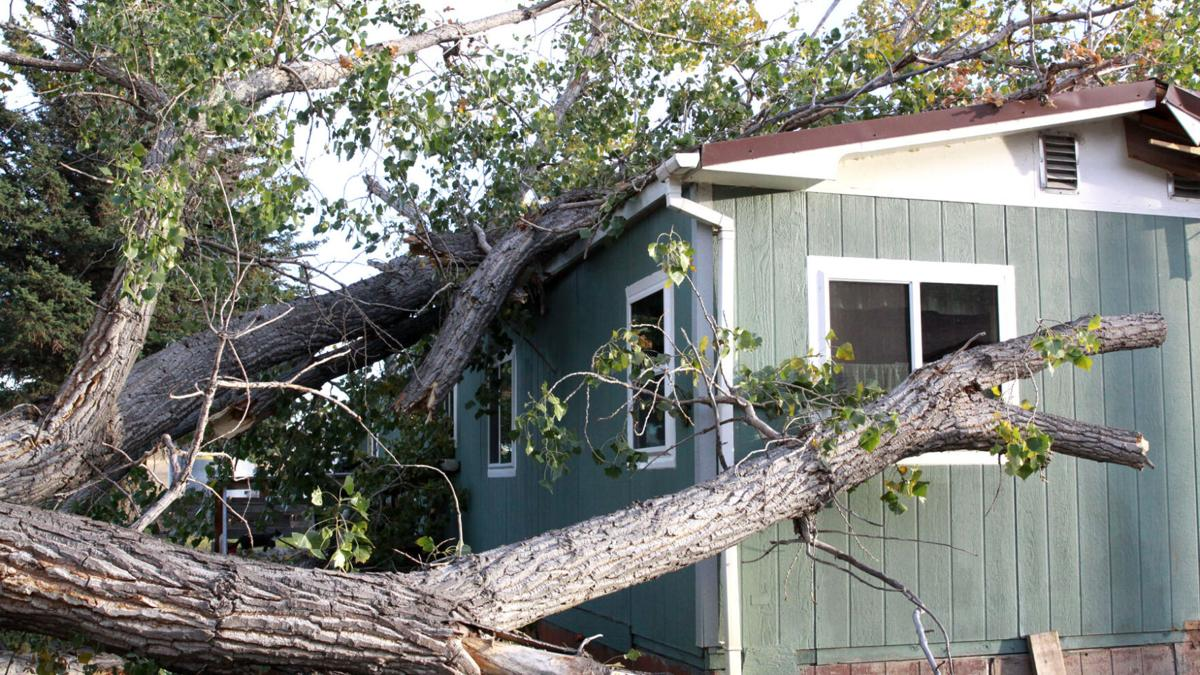 Tree damages rural home
