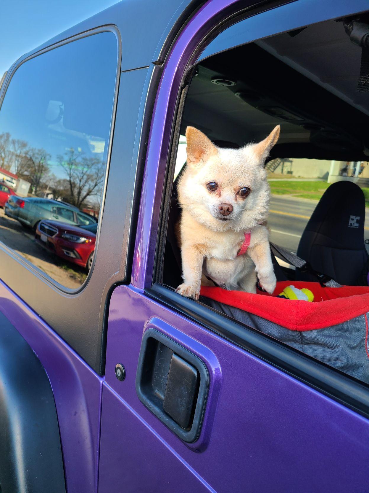 Cruising Dog