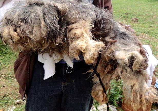 Amish dog breeder cleared of animal cruelty charges | News