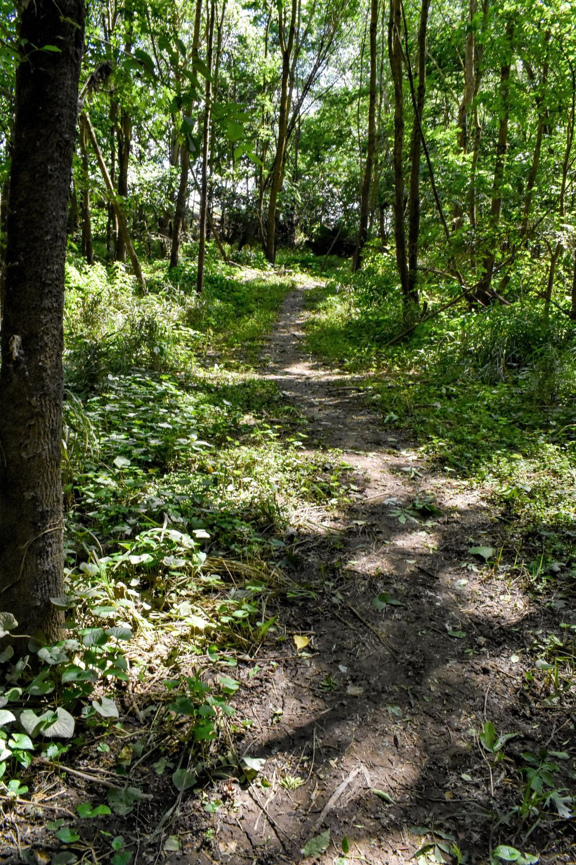 Canal Park Trail