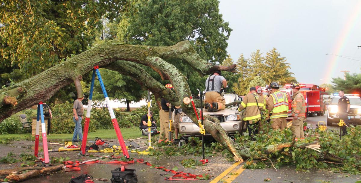 Tree limb support
