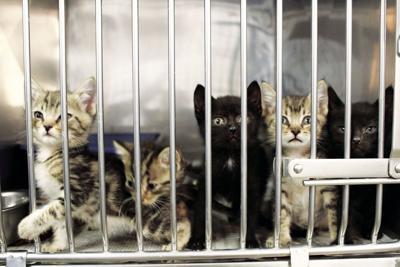 Claremore Animal Shelter