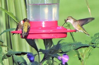 Time to get out Hummingbird feeders