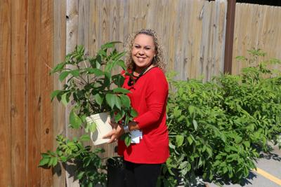 Cherokee Nation Businesses helps preserve traditional plants