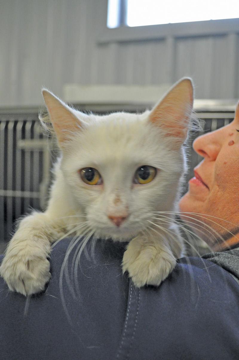 Adopt a Pet - Angel