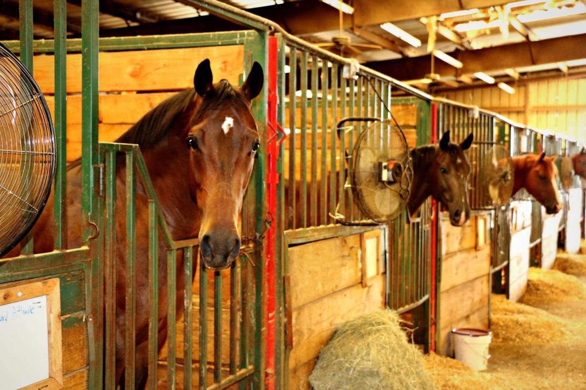 American quarter horses return to Claremore Sept. 8