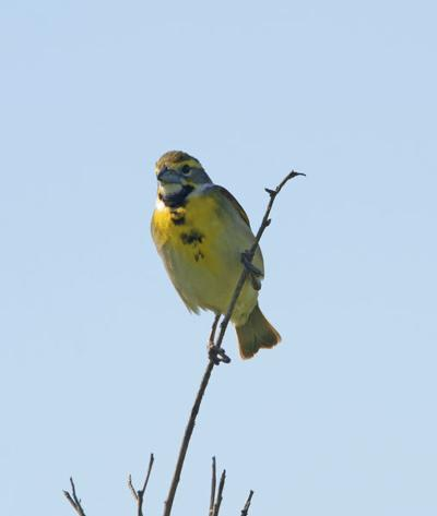 Birding Today: Add native plants to our ecosystems