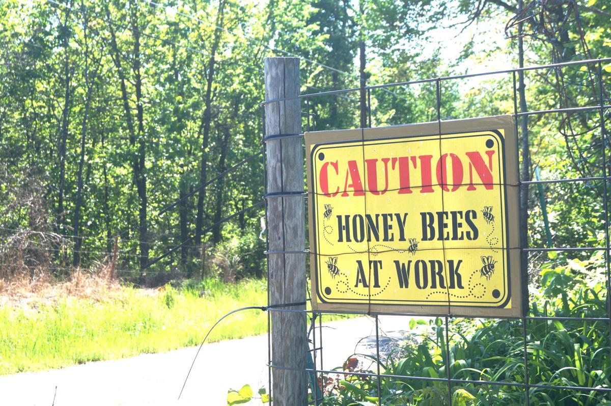 bees stolen