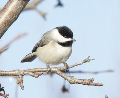 Birding today