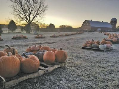 Pumpkin Festival returns for another year