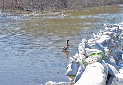 Wildlife affected by flooding in Oklahoma