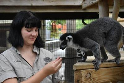 Lemur pup