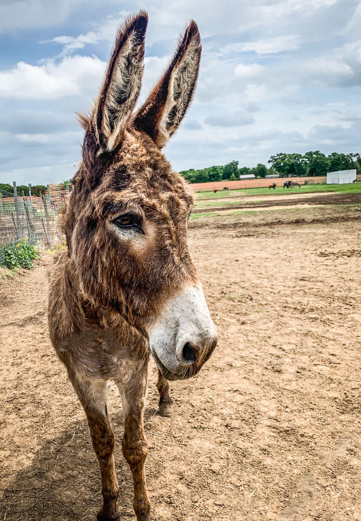 More than 60 donkeys, horses available for adoption | Local
