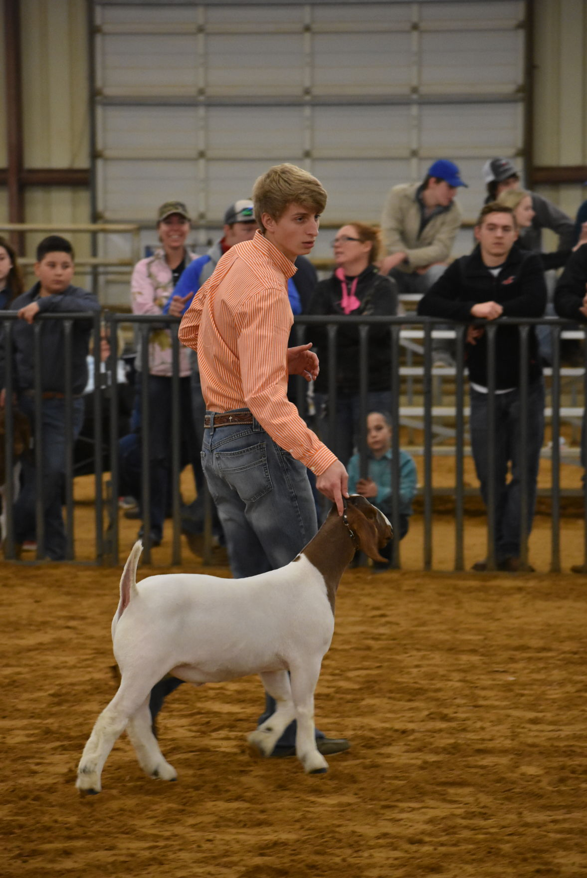 Late grandmom inspires goat grand champion | Local News