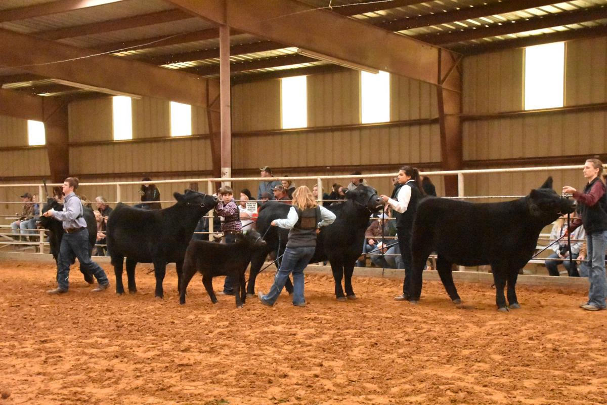 Lucky Luckie Takes Grand In Heifer Show Local News