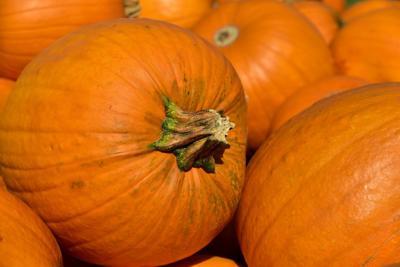 stock pumpkin