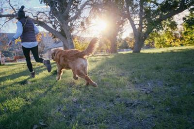 Dog companion stock