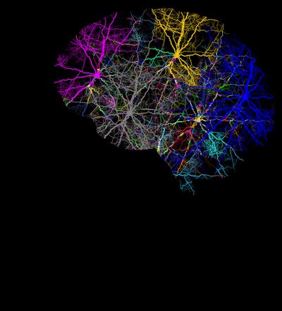 stock brain