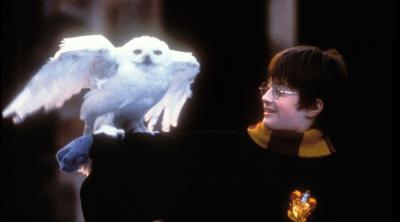 Daniel Radcliffe reads Harry Potter to online audience