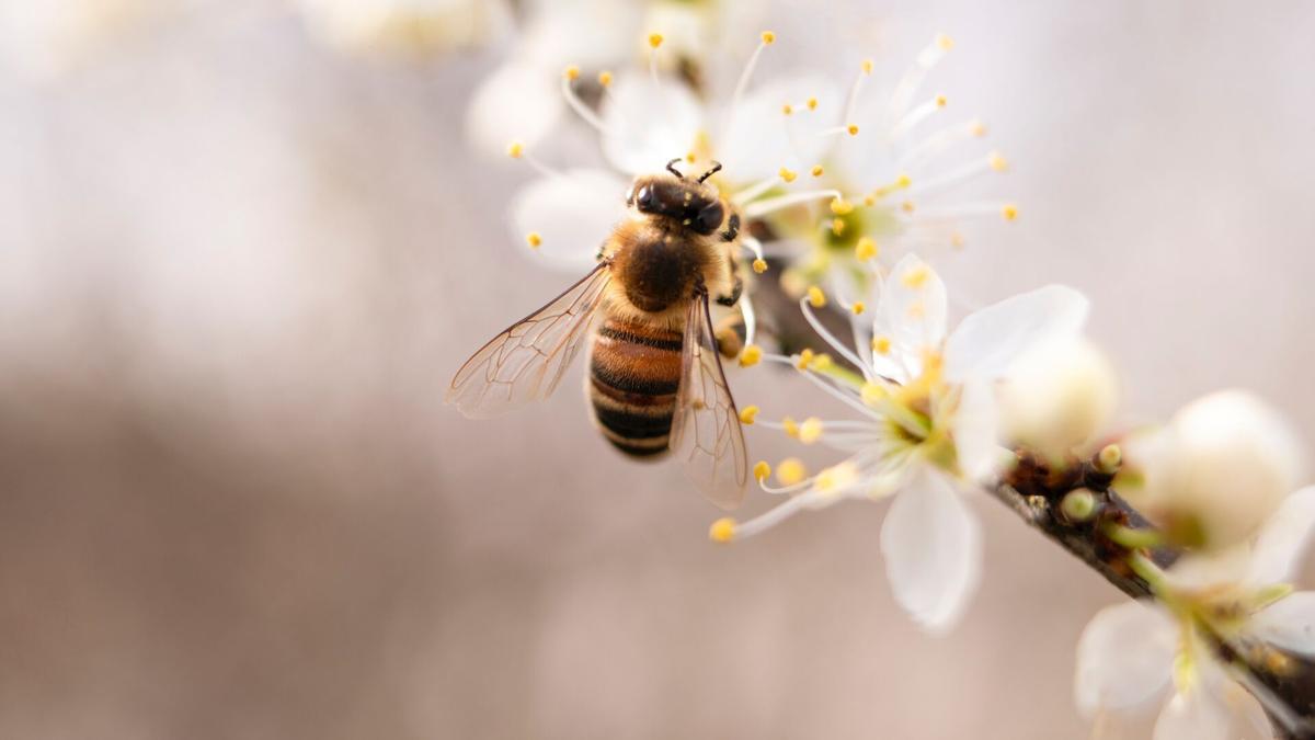 Stock bee