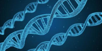 Stock DNA genetics