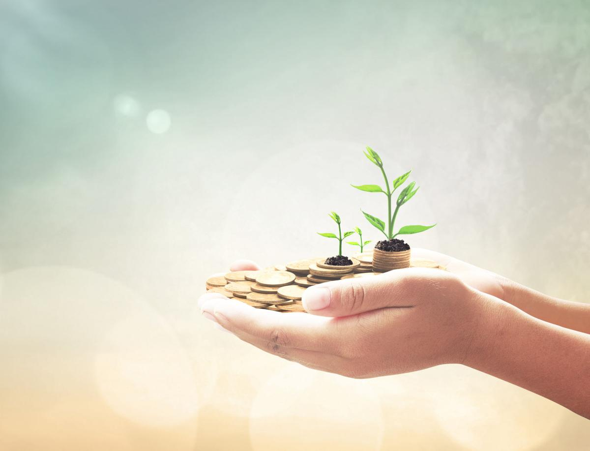 Investment concept: Entrepreneur hand holding golden coins and small trees over blurred nature background