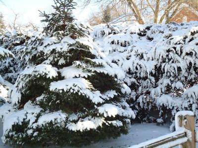 GREEN SCENE: Winter storm damage