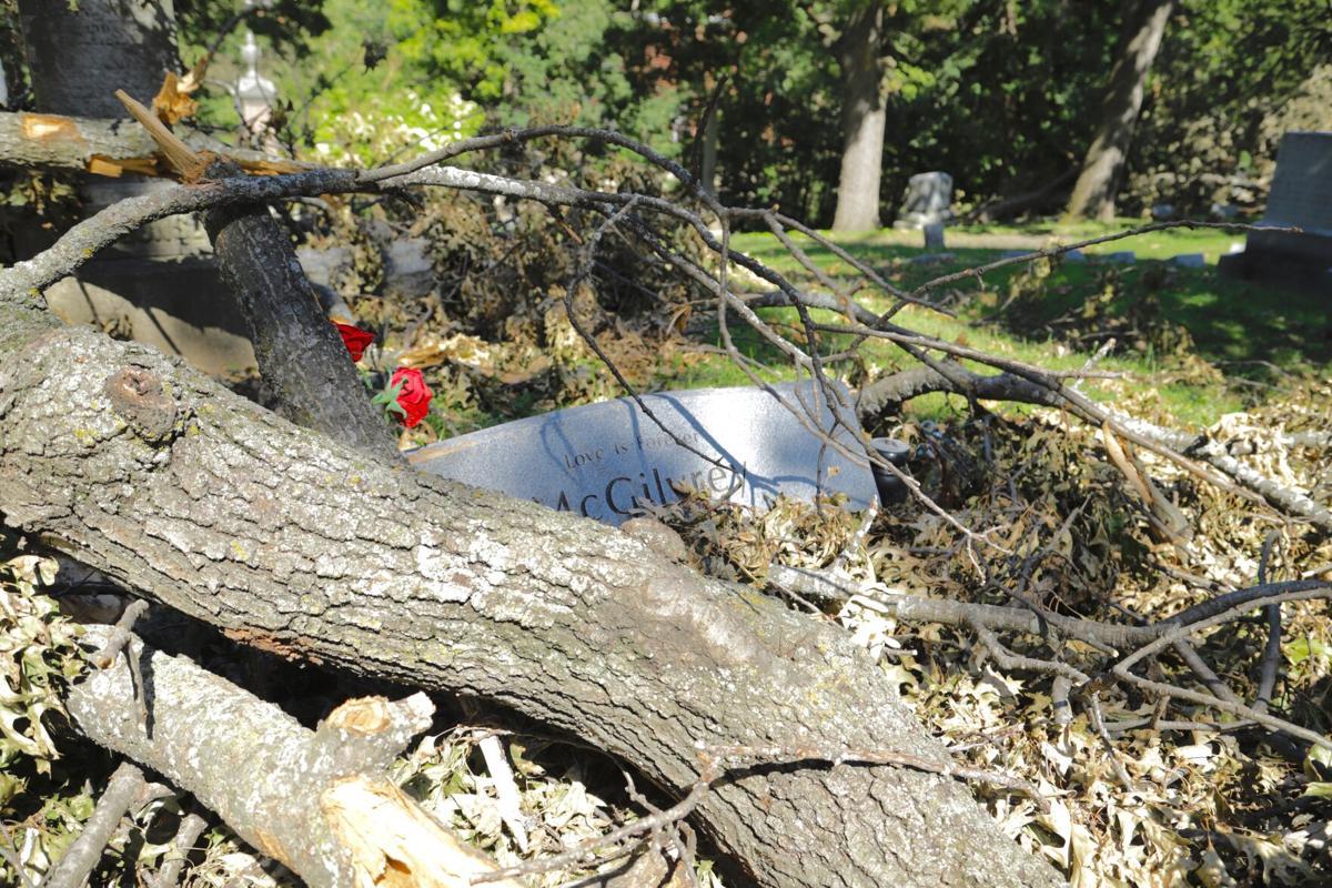 tree covers gravestone, storm damage, Springdale Cemetery