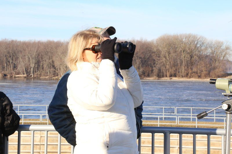 Warm temperatures keep eagle count low at dam