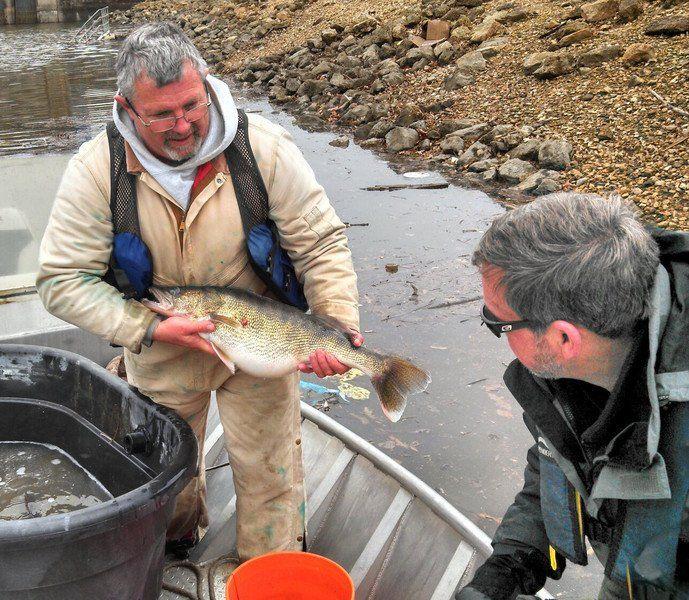 Exelon's fishery program excels